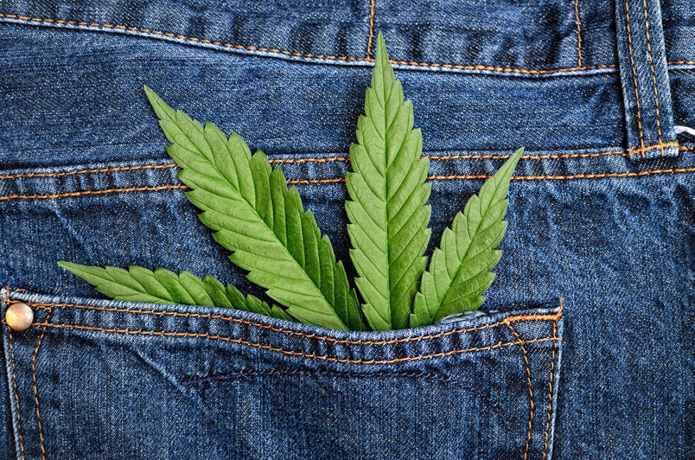 What_you_should_know_about_Industrial_Hemp